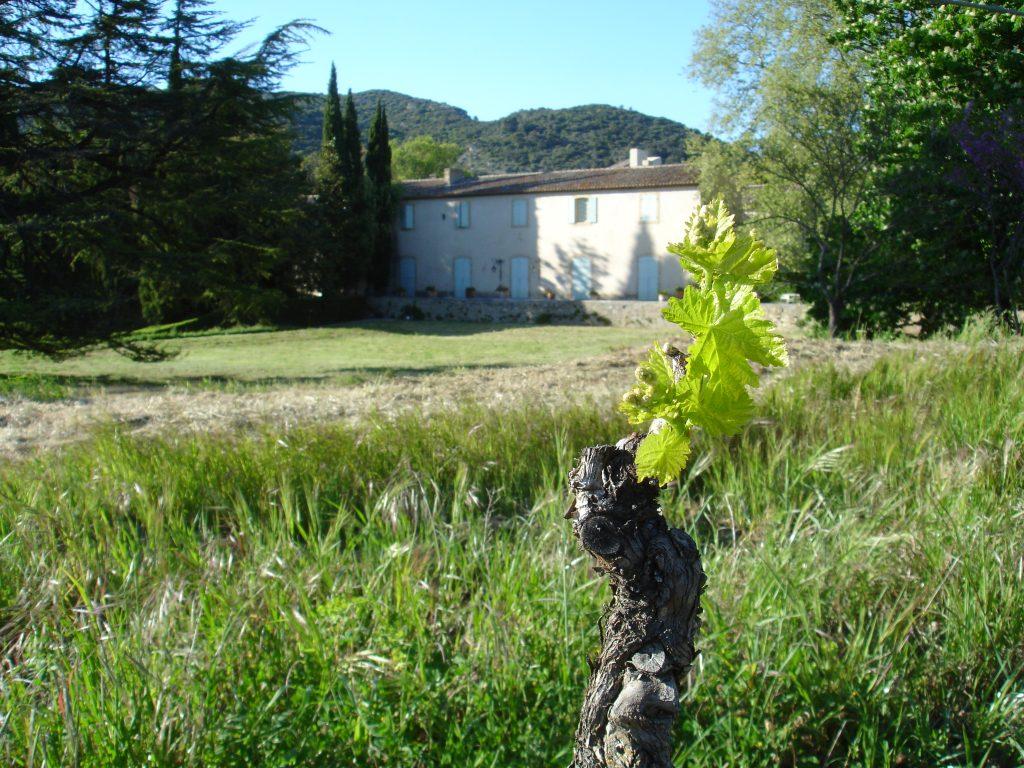 Vigne_chateau